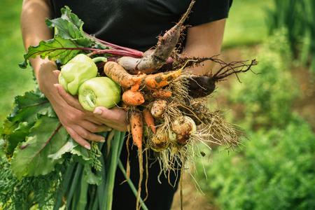 Vrouwen die heerlijke verse groenten Stockfoto - 42031172