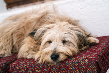 cute house: Cute dog in house sleeping Stock Photo