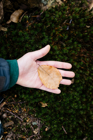 Child in nature holding leaf