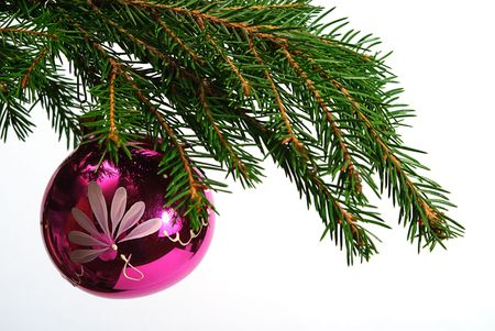 green  fir tree  twig and red ball photo