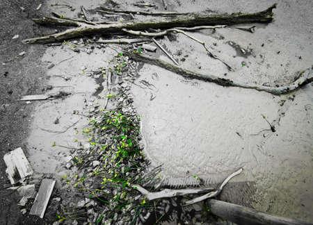 Selective colour tone. Mangrove saplings stranded on the beach