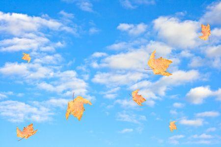 autum leaves against blue cloudy sky photo