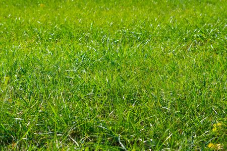 Beautiful green grass field texture Stock Photo