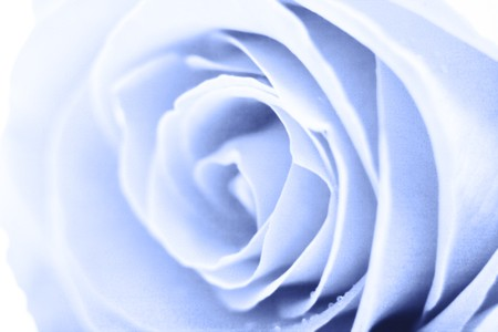 simulating: Abstract background simulating a gentle blue rose