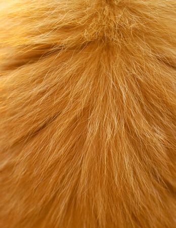 artificial hair: Texture of a wool of a cat of red color. Shallow DOF