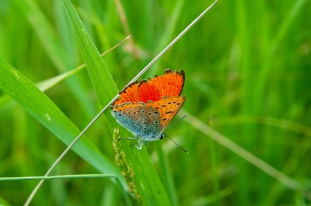 The beautiful butterfly on green grass. Natural background. Shallow DOF  photo
