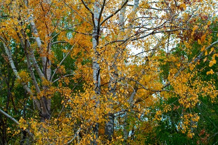 Autumn at the park. Yellow and green branches of trees and blue sky Stock Photo - 7817214