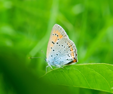 The beautiful butterfly on green grass. Natural background. Shallow DOF Stock Photo - 8296279