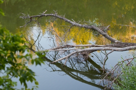 The landscape with forest lake. Shallow DOF Stock Photo