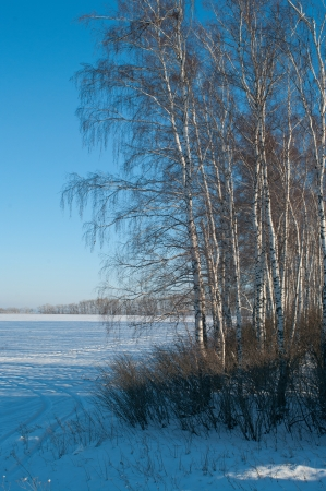 The winter landscape with frozen birches. Shallow DOF Stock Photo