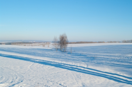 The winter trees in a field with blue sky