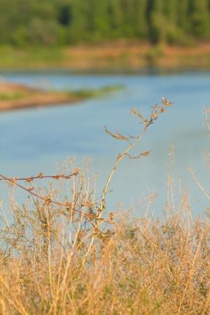 Summer landscape with plant against river Belaya, Ufa area, Bashkortostan, Russia. Shallow DOF