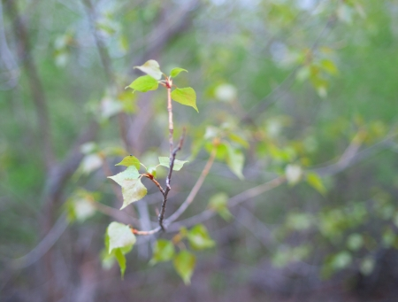 The branch with green leaves on abstract background. Shallow DOF