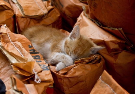 Red cat is sleeping on cardboard bags. Shallow DOF Stock Photo