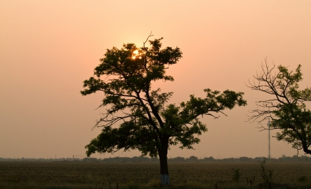 The beautiful sunset with silhuette of trees. Shallow DOF