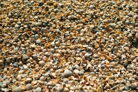 Sea shells on sand as background. Shallow DOF