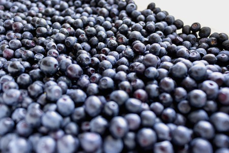 bilberry: Summer background with bilberry
