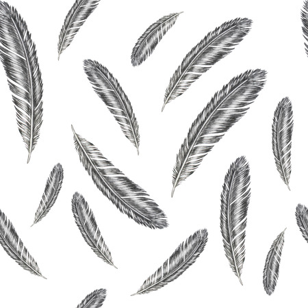 Hand drawn feather illustration. Feather pattern on white background. Imagens