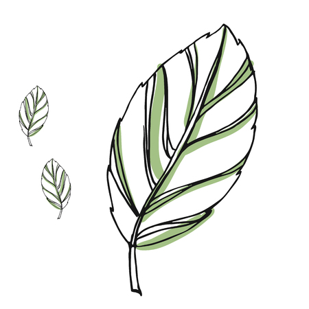 Leaf vector drawing set. Isolated tree leaves. Herbal engraved style illustration. Organic product sketch. Hand drawn leaf Illustration