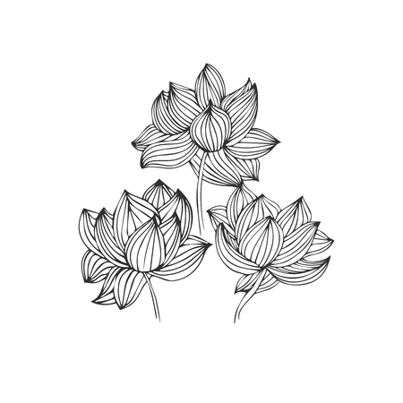 Black and white ink hand drawn roses in vector