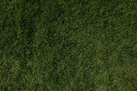 level playing field: green lawn Stock Photo