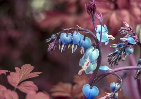 hemorragias: Coraz�n sangrante azul