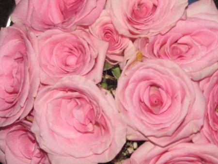 Pink Roses Фото со стока