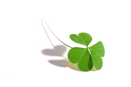 A single clover isolated on white. Perfect for use with Luck or St. Patrick's Day themes. Stock Photo - 4368738