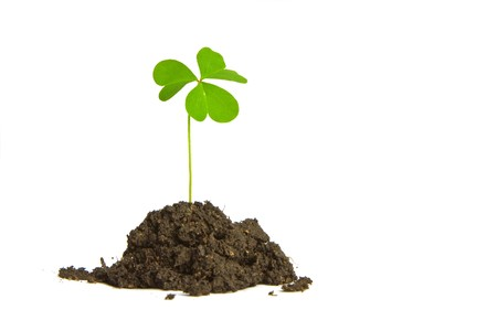 A single clover buried in a clump of soil. Perfect for use with St. Patrick's Day or Luck themes Stock Photo - 4368735