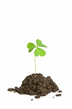 A single clover buried in a clump of soil. Perfect for use with St. Patrick's Day or Luck themes Stock Photo - 4368743
