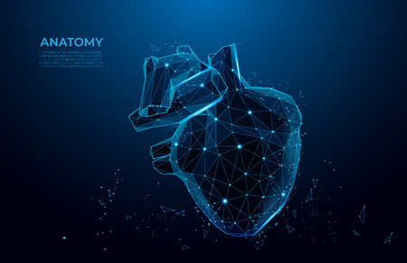 Human heart anatomy form lines and triangles.  Polygonal 3D human organ on blue background. Medicine concept with geometry triangle. mesh art.