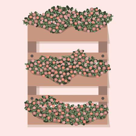Garden decorative wooden case flower. Beautiful spring and summer plants, herbs and flowers. Vector flat cartoon illustration. Floriculture, gardening.