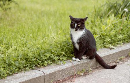 Cat on a grass Banco de Imagens
