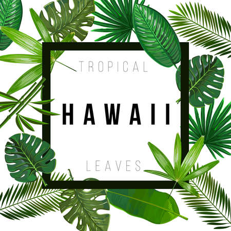 Tropical leaves on white background with isolated sign Hawaii. Pattern nature. Vector art isolate. 일러스트