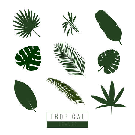 Vector tropical leaves isolate on white. Palma, bamboo, exotic plants. Symbols icons. Art. 일러스트