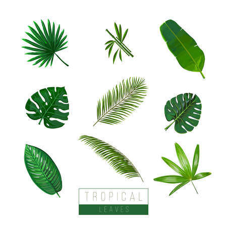 Vector tropical leaves isolate on white. Palma, bamboo, exotic plants. Colors art.