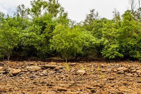 The Lush Green Trees of Panshet Dam
