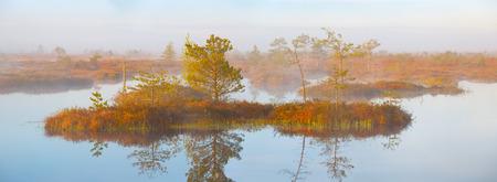 belarus: Foggy morning at Yelnya swamp, Belarus Stock Photo