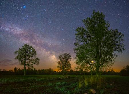Vecchie querce sotto cielo stellato