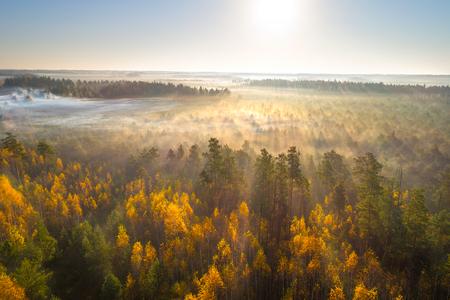 Aerial shot of foggy autumn morning at swamp Astravy Duleby, Belarus Фото со стока