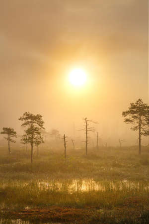 Foggy morning at the uniquie Yelnya bog (Belarus)