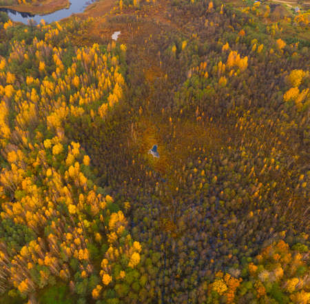 Natural reserve Sin'sha (Belarus) from the bird's eye view Standard-Bild