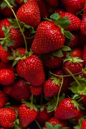 Red, fresh juicy strawberries collected in boxing. Archivio Fotografico