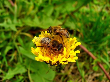 two bees photo