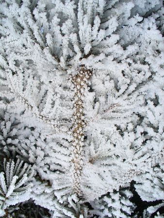 white winter Stock Photo - 2268467