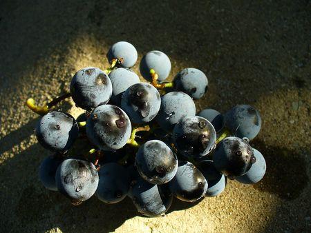 blue grape Stock Photo - 2404531