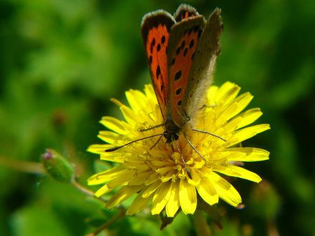 loveliness: red butterfly