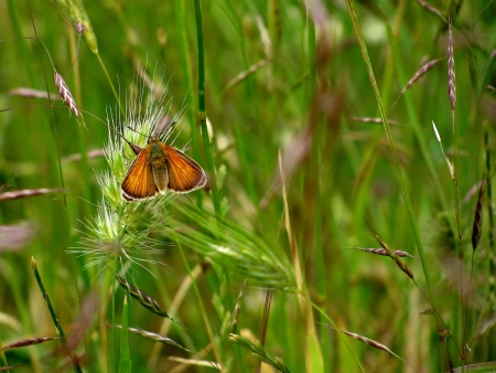 butterfly and green grace