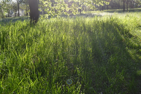 The green grass in the dew is illuminated by the suns rays in the early morning in the park