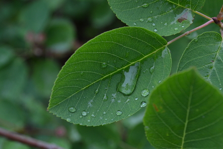 Drops of rain on the green leaves in the early morning in the summer in the park Reklamní fotografie